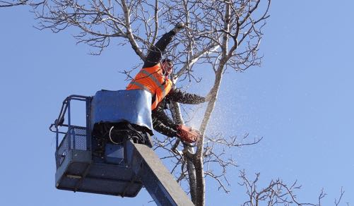 Tree removal in Lynnwood Washington