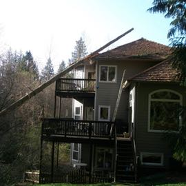 trees damage because its dangerous proximity range to the house when it fell
